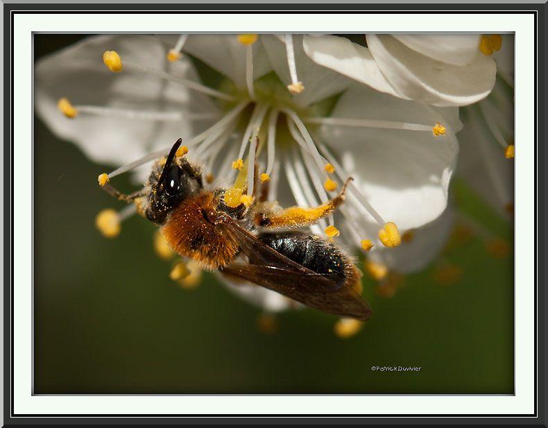 Renversant...ce pollen !