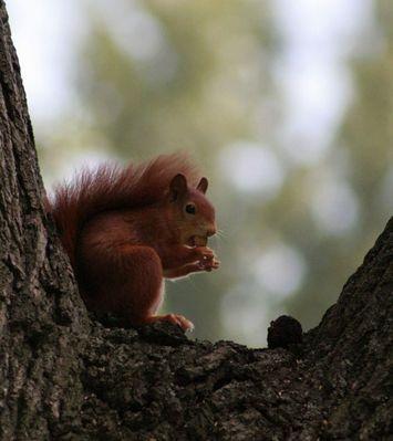 Repas de l'écureuil