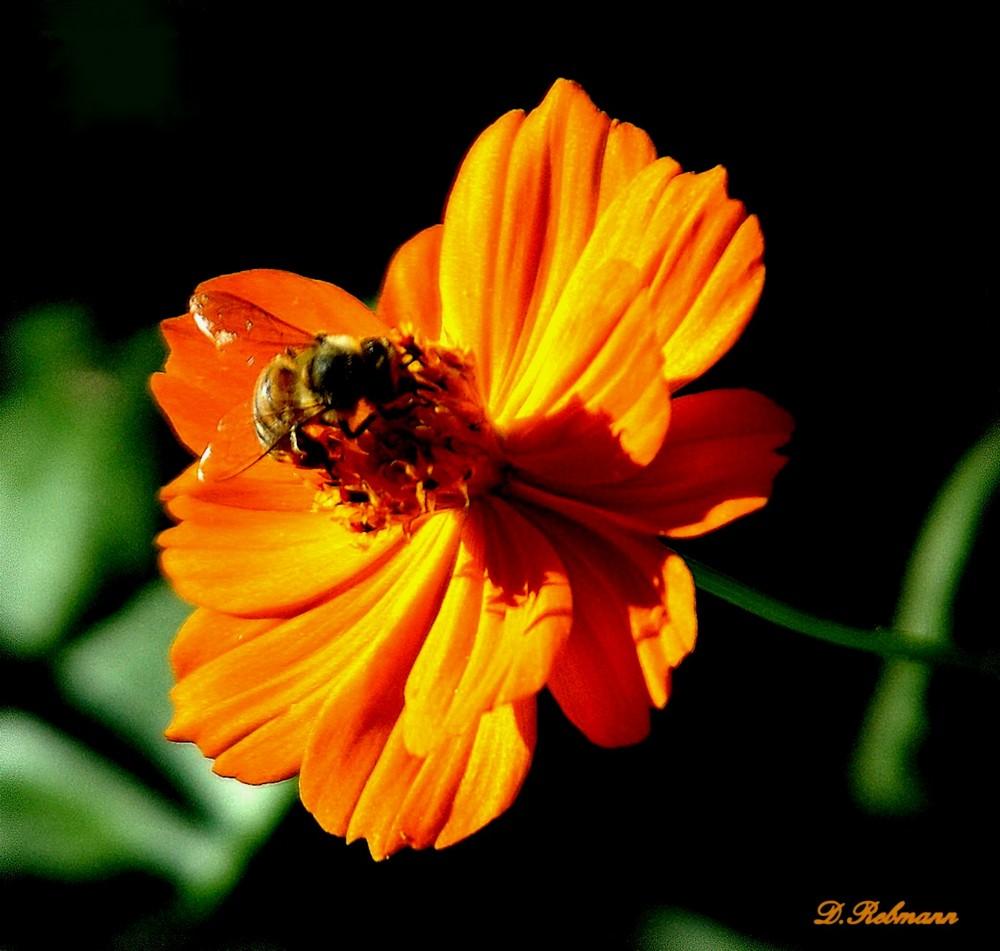 repos d'une abeille
