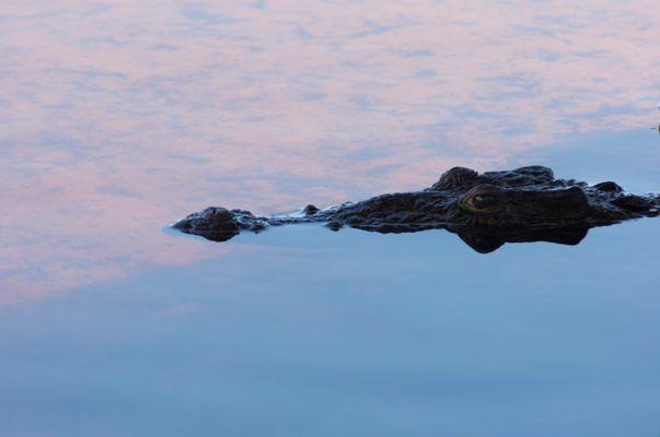 Reptil 002