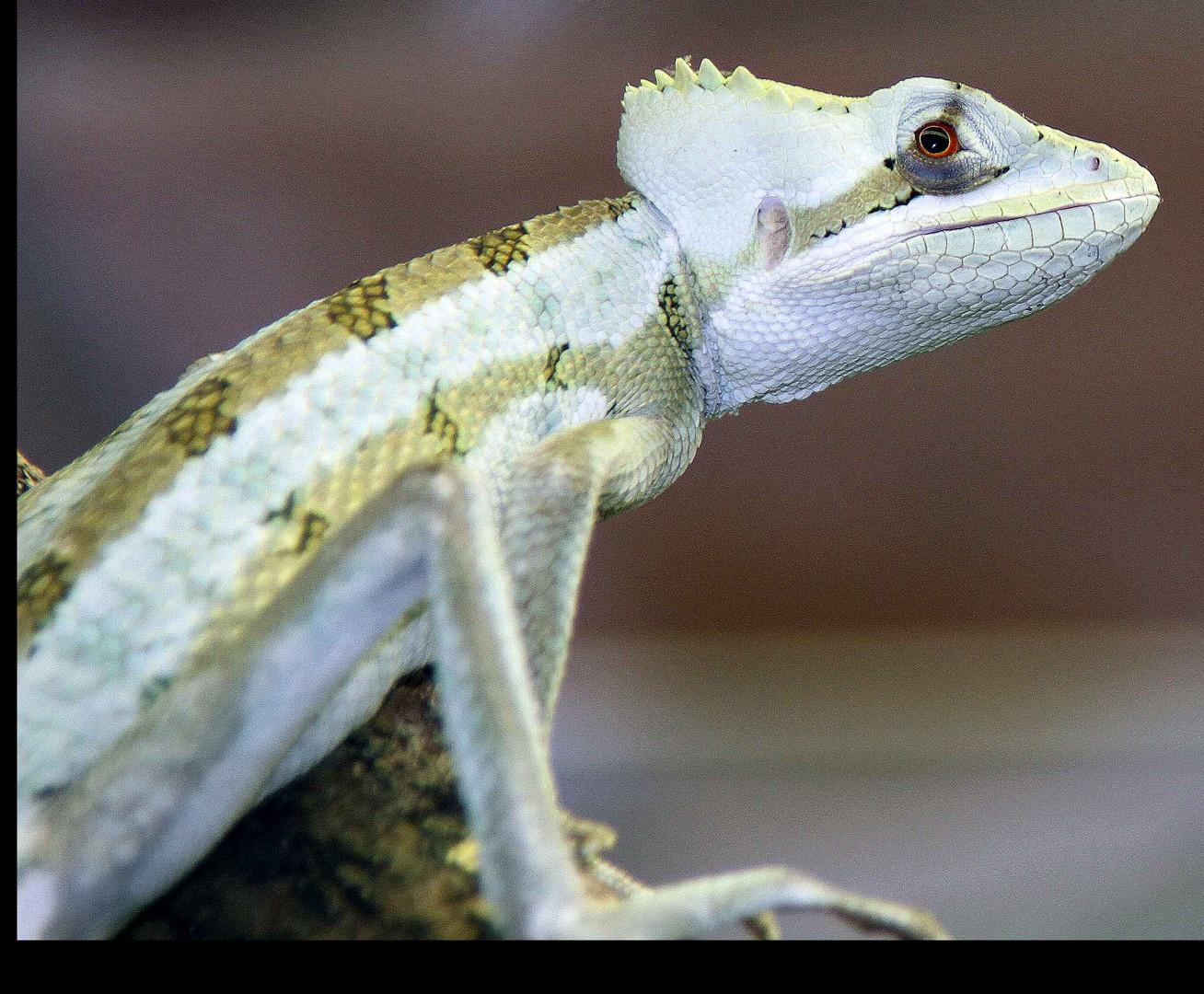 Reptil 1