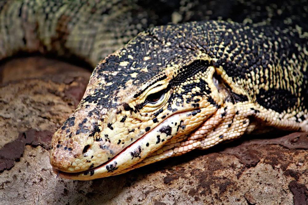 Reptil ;)