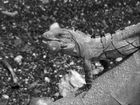 Reptil am Wegesrand