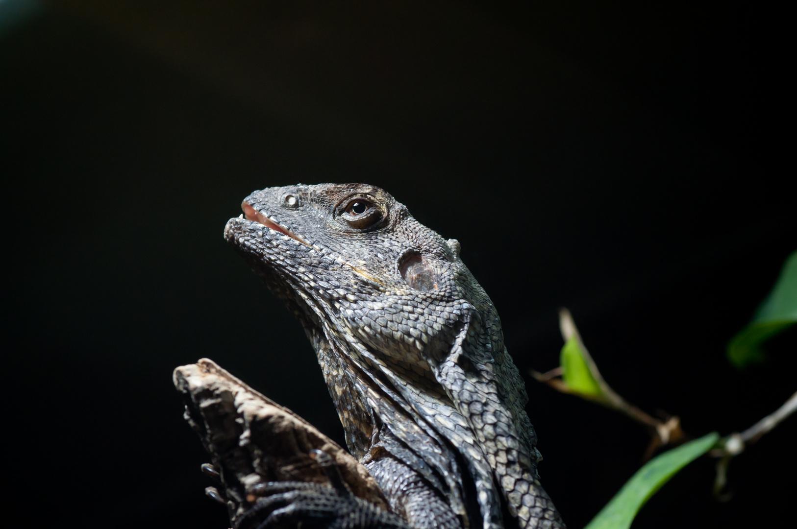 Reptil No1
