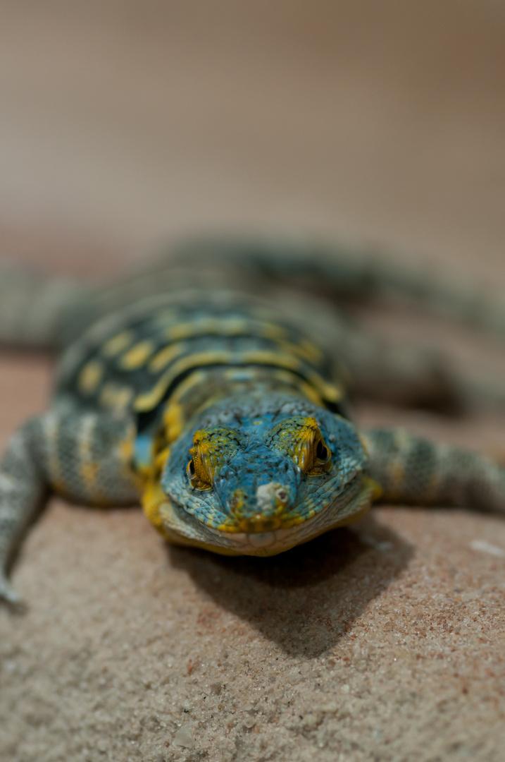 Reptil No2