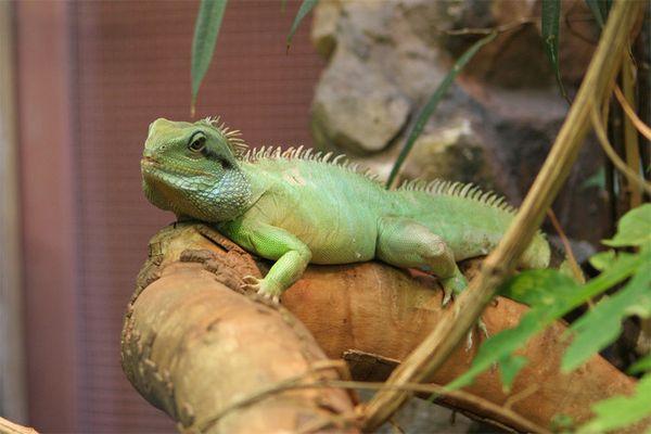Reptil Zoo Amsterdam