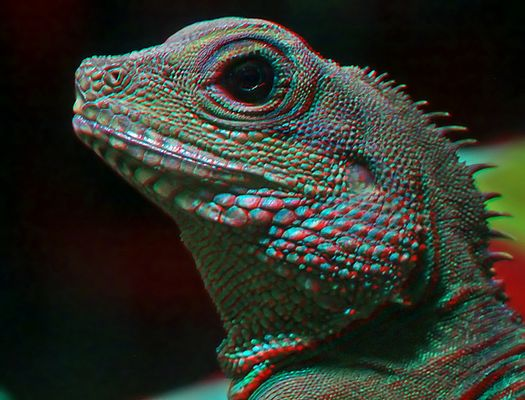 Reptile (mini-chacha) 3d ana