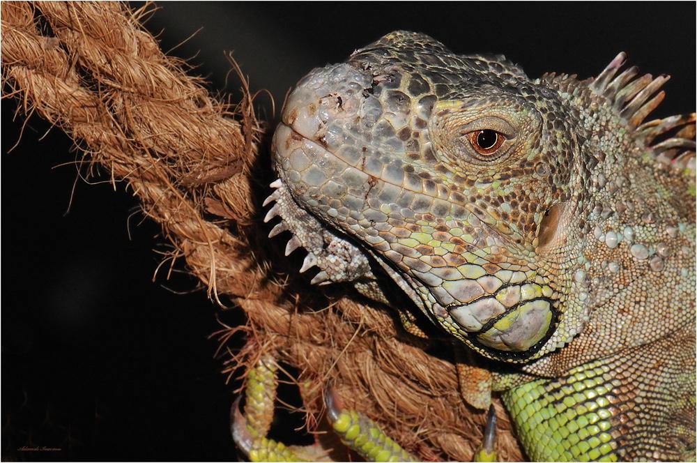 Reptilien Ausstellung im Weisweiler