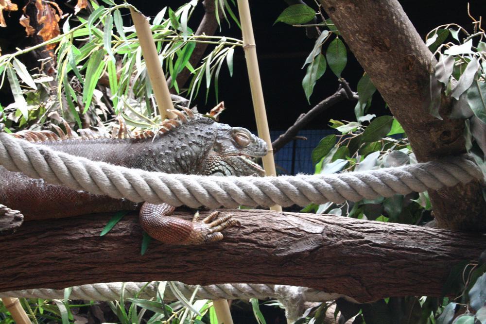 Reptilien im Zoo Duisburg