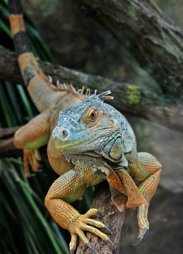 Reptilien-Posing