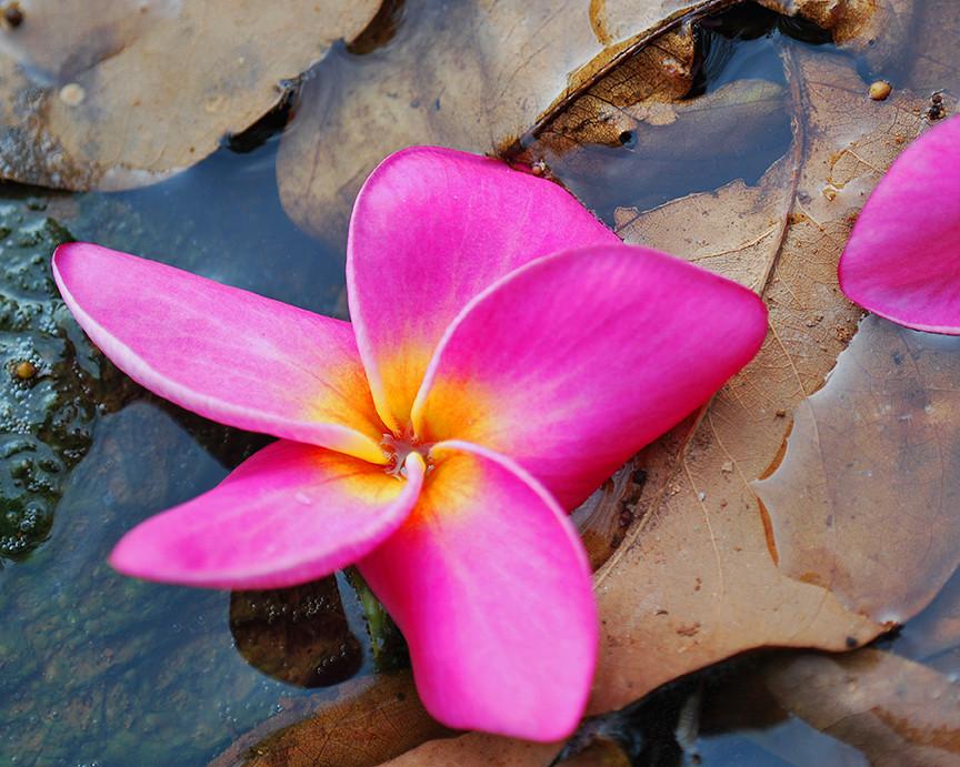 Requiem para una flor