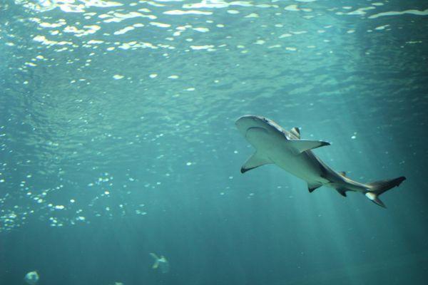 requin a l'aquarium de paris