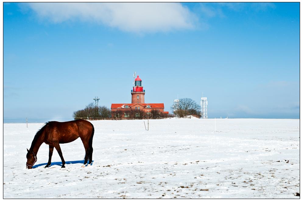 Reriker Schneepferd