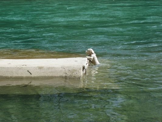RESERVOIR DOG