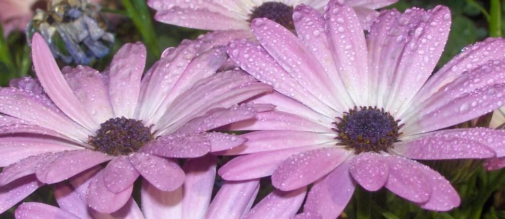 residui di pioggia