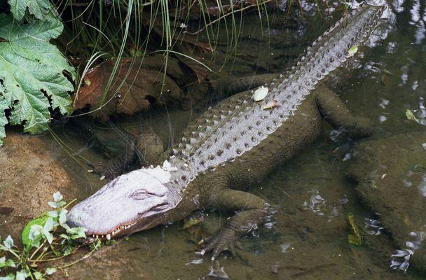 rest in peace, crocodile hunter