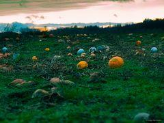 rest of autumn