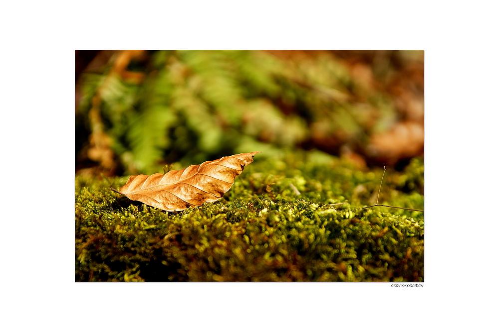 Rest vom Herbst ...