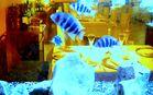 Restaurant unter Wasser