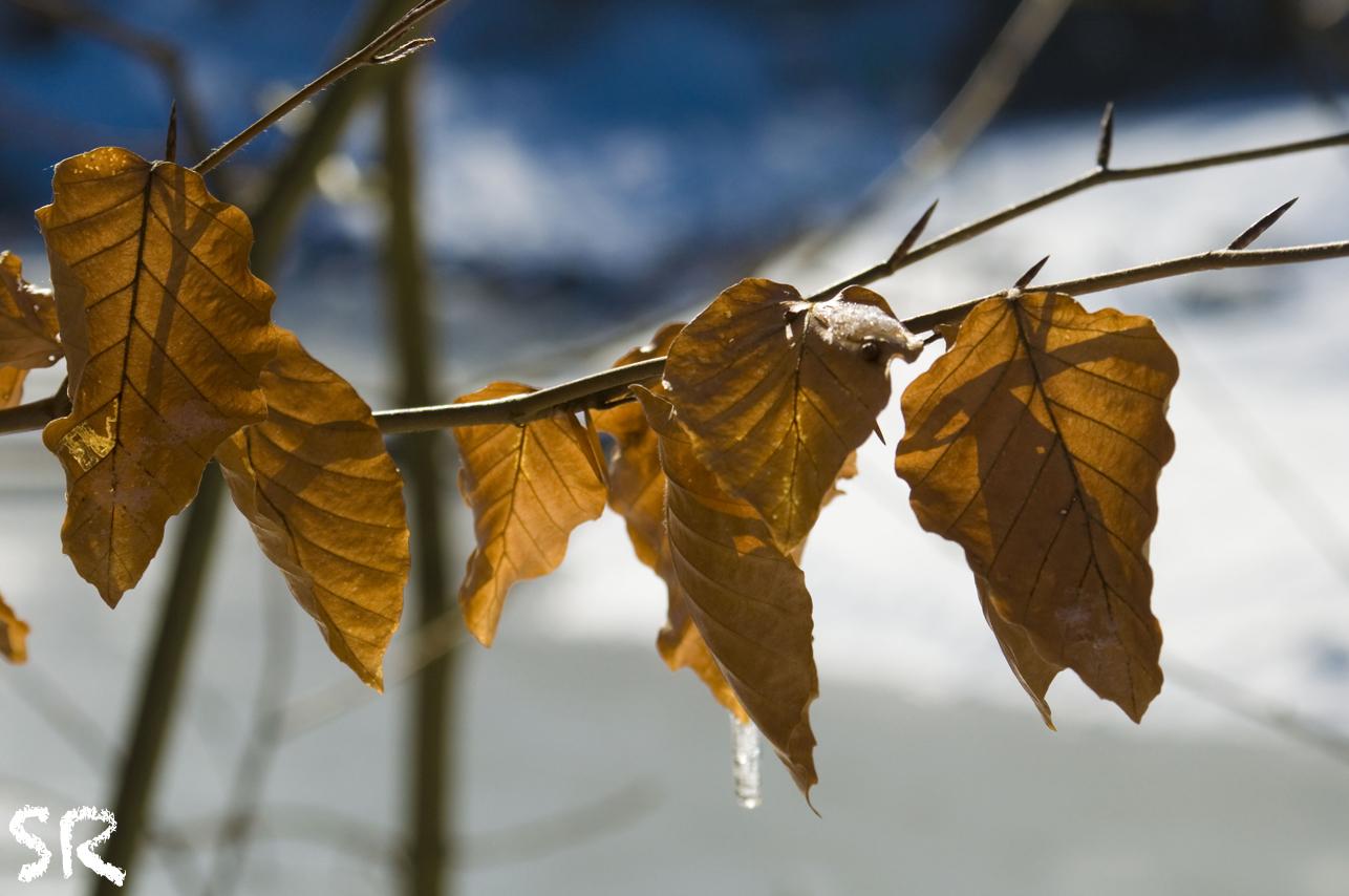 Reste vom Herbst