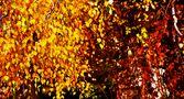 ..Restfarben im Herbst... by SINA