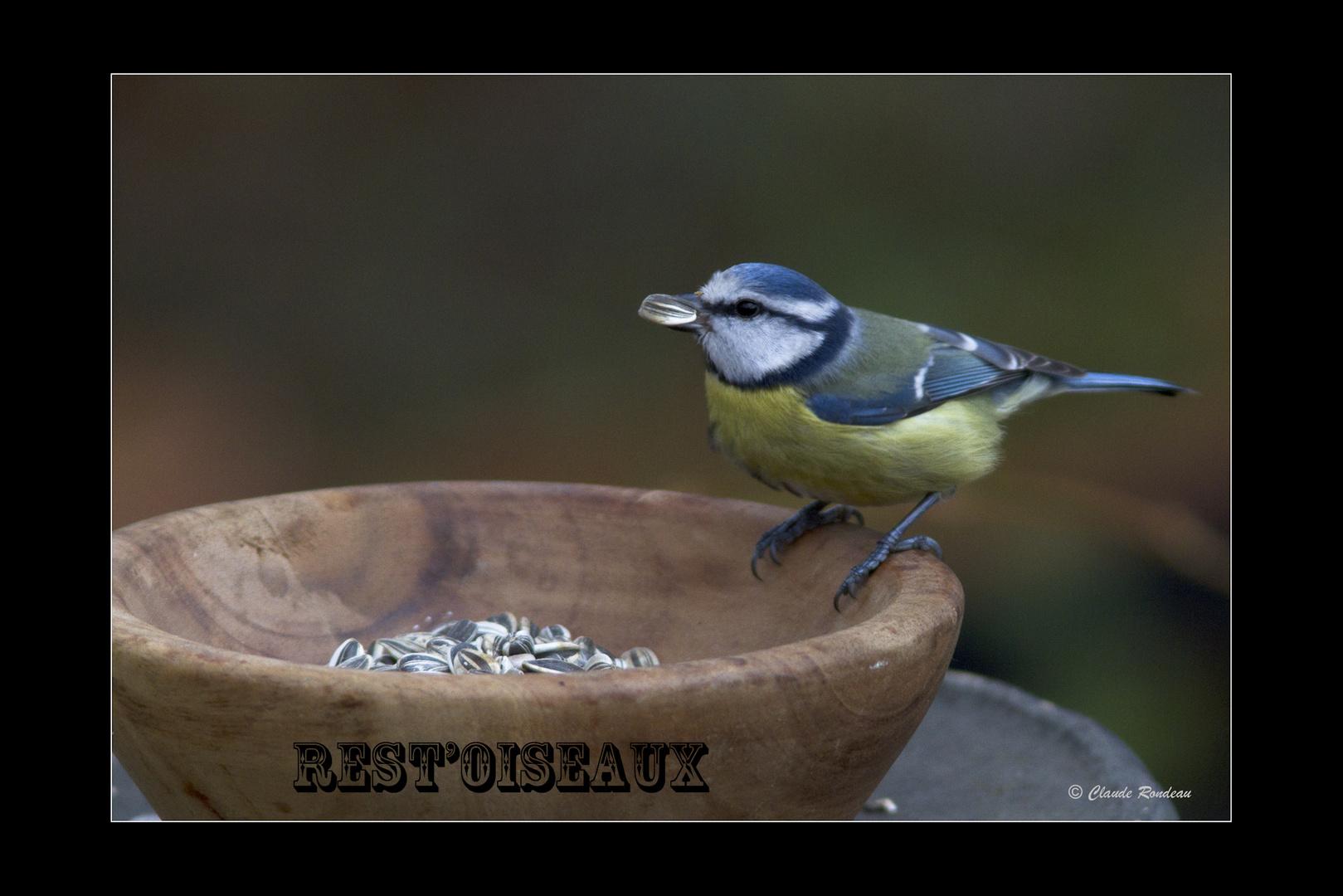 Rest'oiseaux