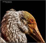 Retrato en el aviario de la Ciudad de las Artes de Valencia