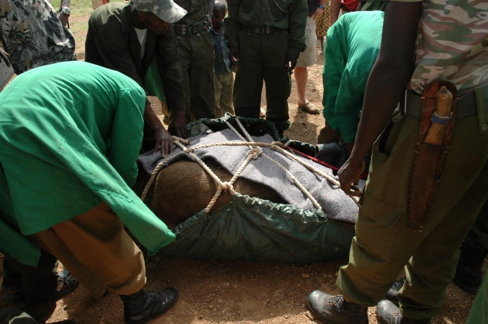 Rettung eines Elefantenbabys- Teil 3