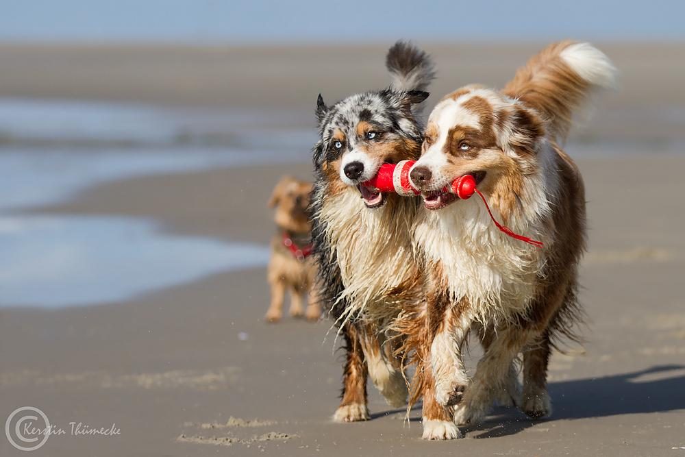 *Rettungshunde*