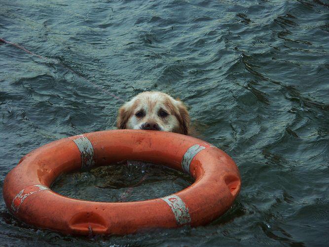 """""""Rettungsschwimmer"""""""