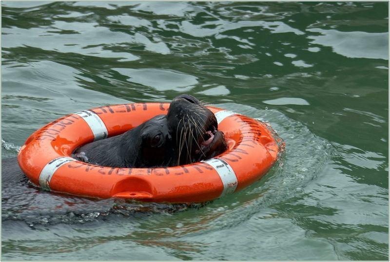 Rettungsschwimmer des Jahres