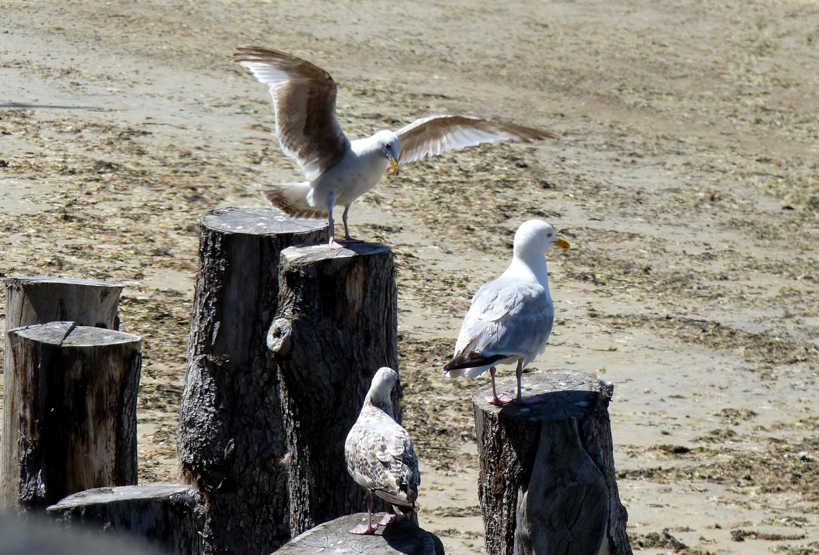 Réunion de famille à Saint-Malo sur les Brises Lames