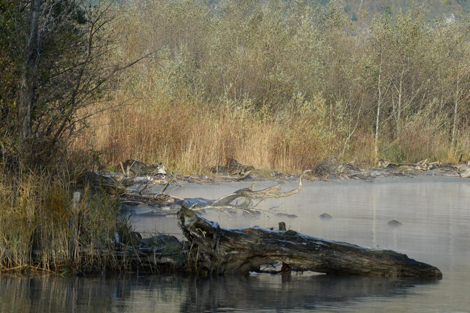 Reuss Delta