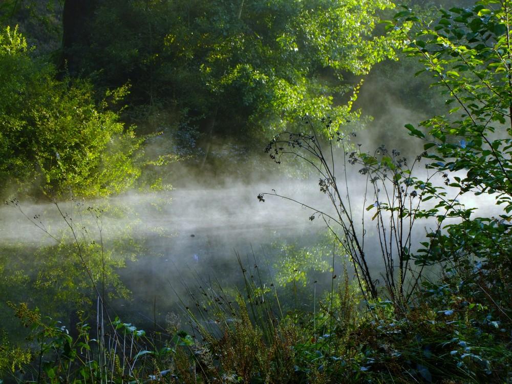 reveil de brume