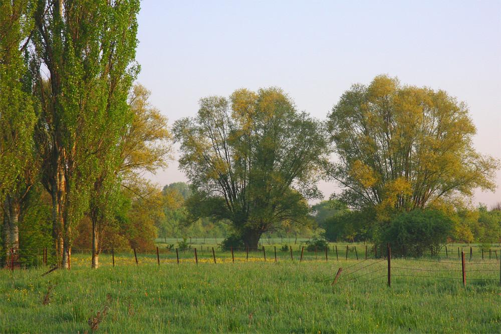 Réveil de la nature en Lorraine - 1