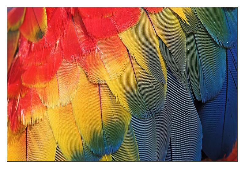 rgb rot gelb blau foto bild tiere zoo wildpark falknerei v gel bilder auf fotocommunity. Black Bedroom Furniture Sets. Home Design Ideas