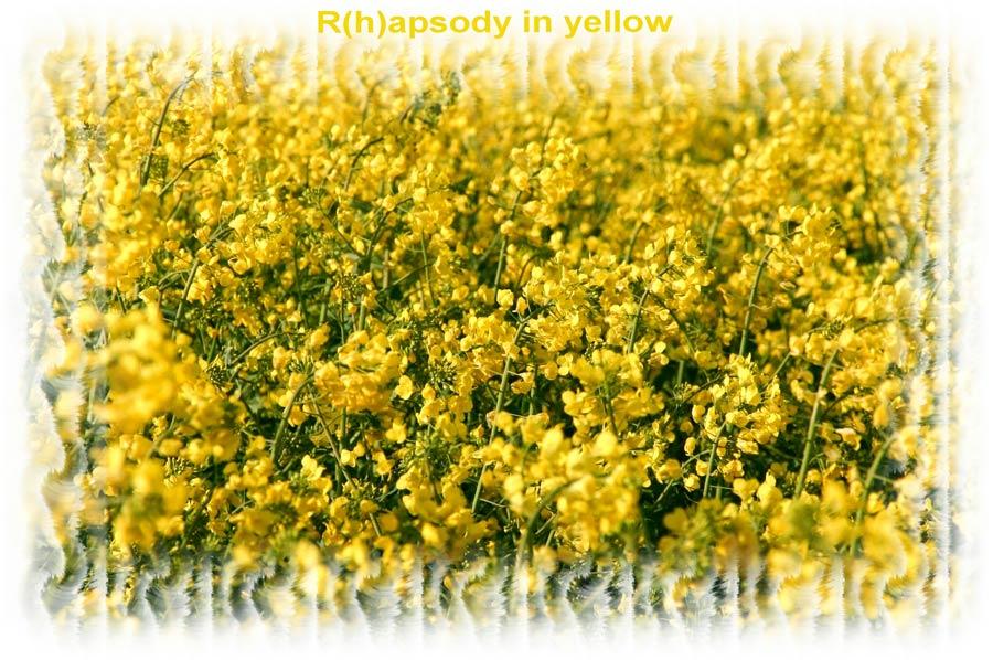 * R(h)apsody In Yellow *