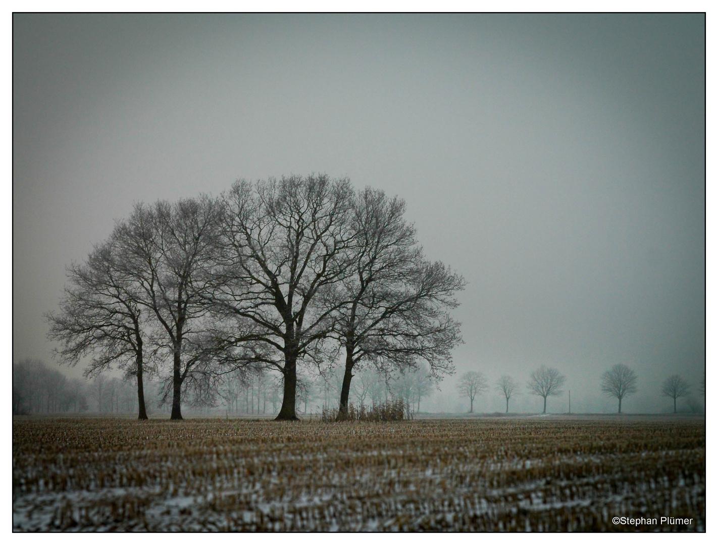 Rhauderfehn Bäume im Dunst