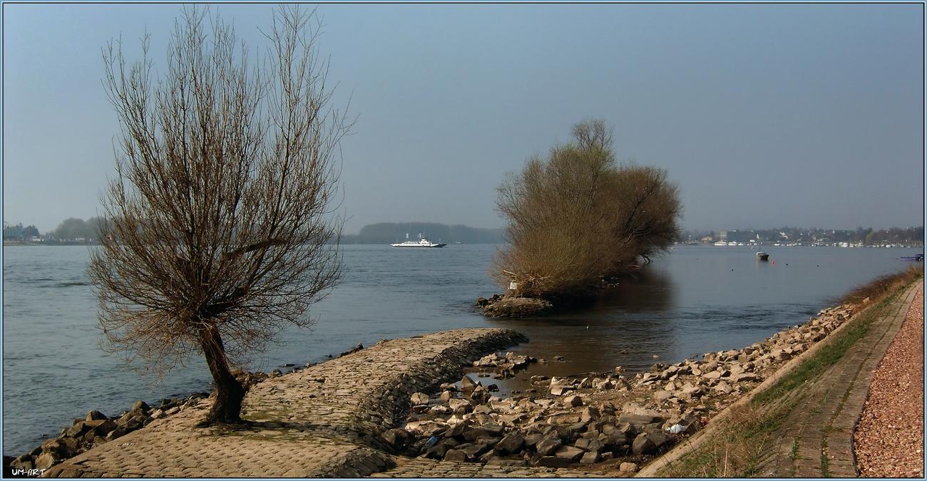 Rhein am Oestrich-Winkel.