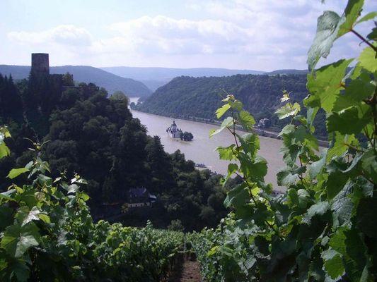 Rhein bei Hochwasser