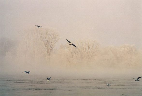 Rhein im Nebel