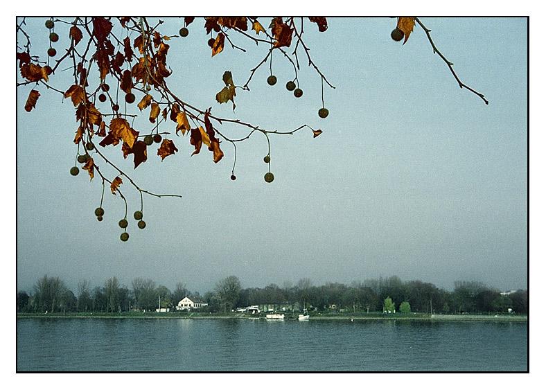 Rhein in Mainz