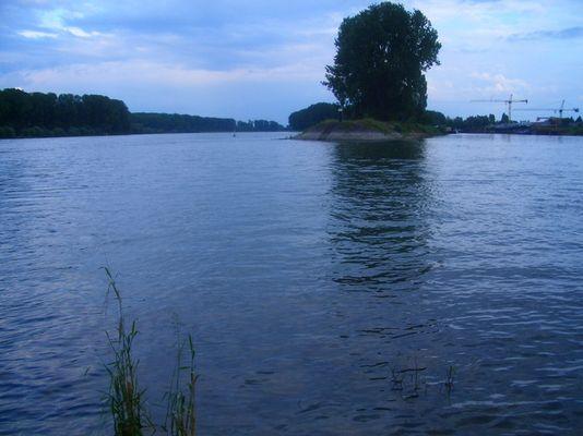 Rhein in Speyer