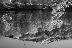 Rhein Spiegelung in Infrarot