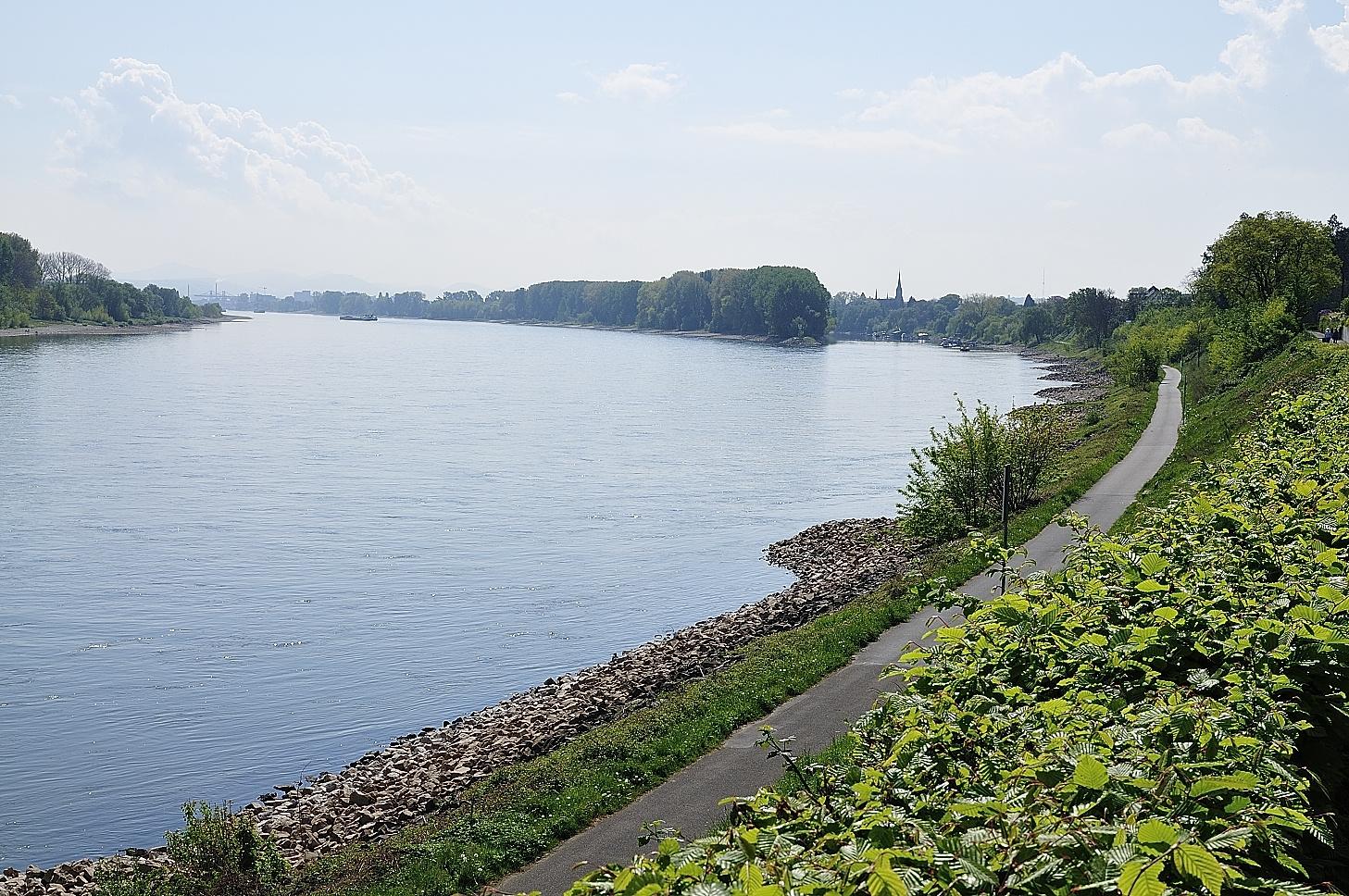 Rhein zwischen Wesseling und Bonn