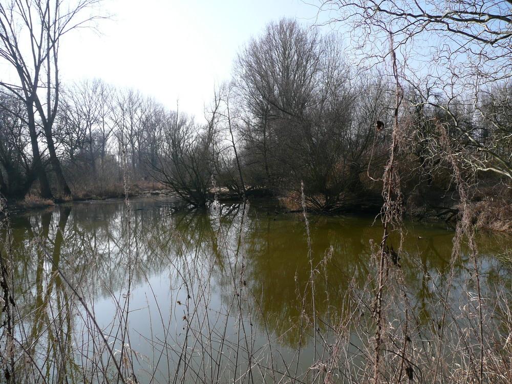 Rheinaue bei Ingeheim