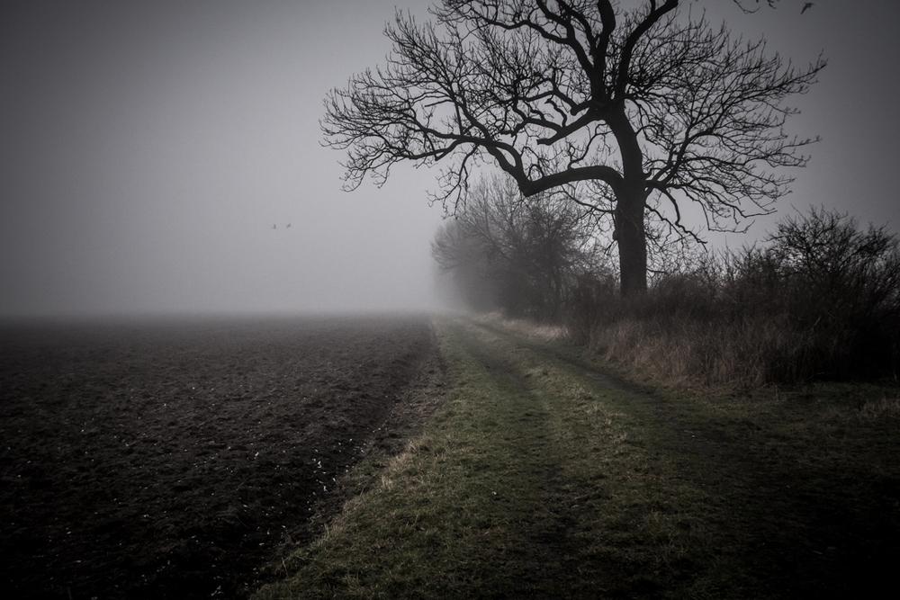 Rheinaue im Nebel versunken