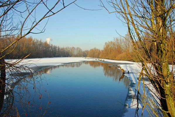 Rheinaue1