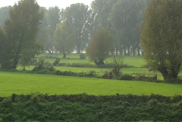 Rheinauen bei Benrath