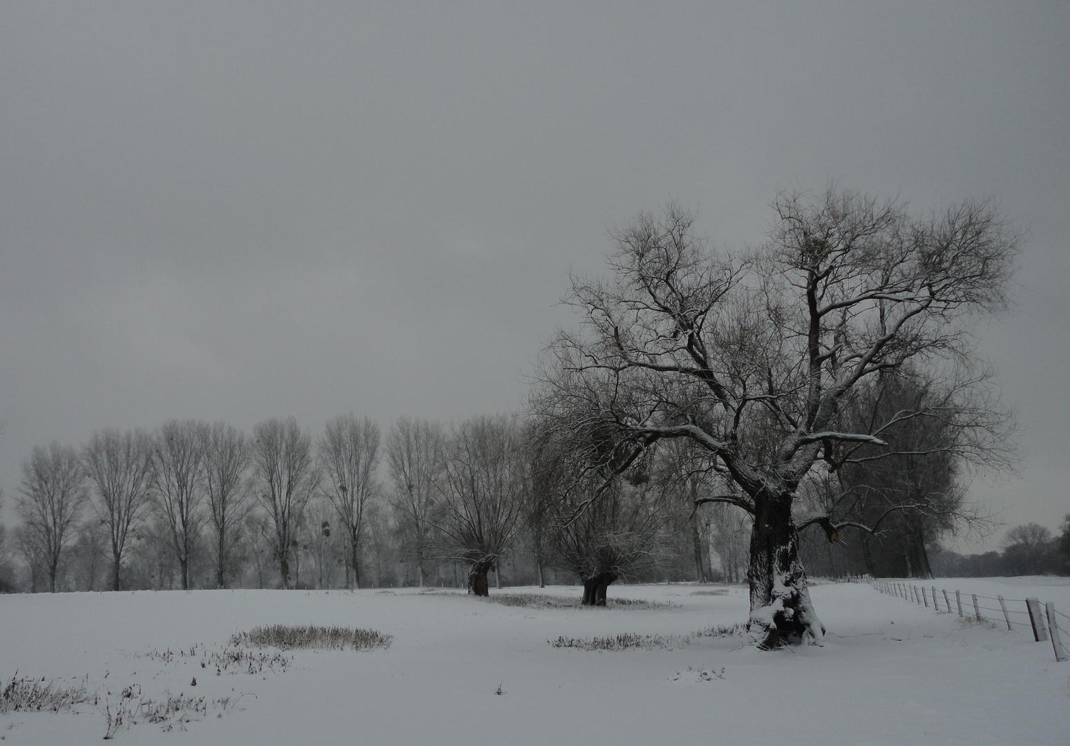 Rheinauen Nähe Himmelgeist